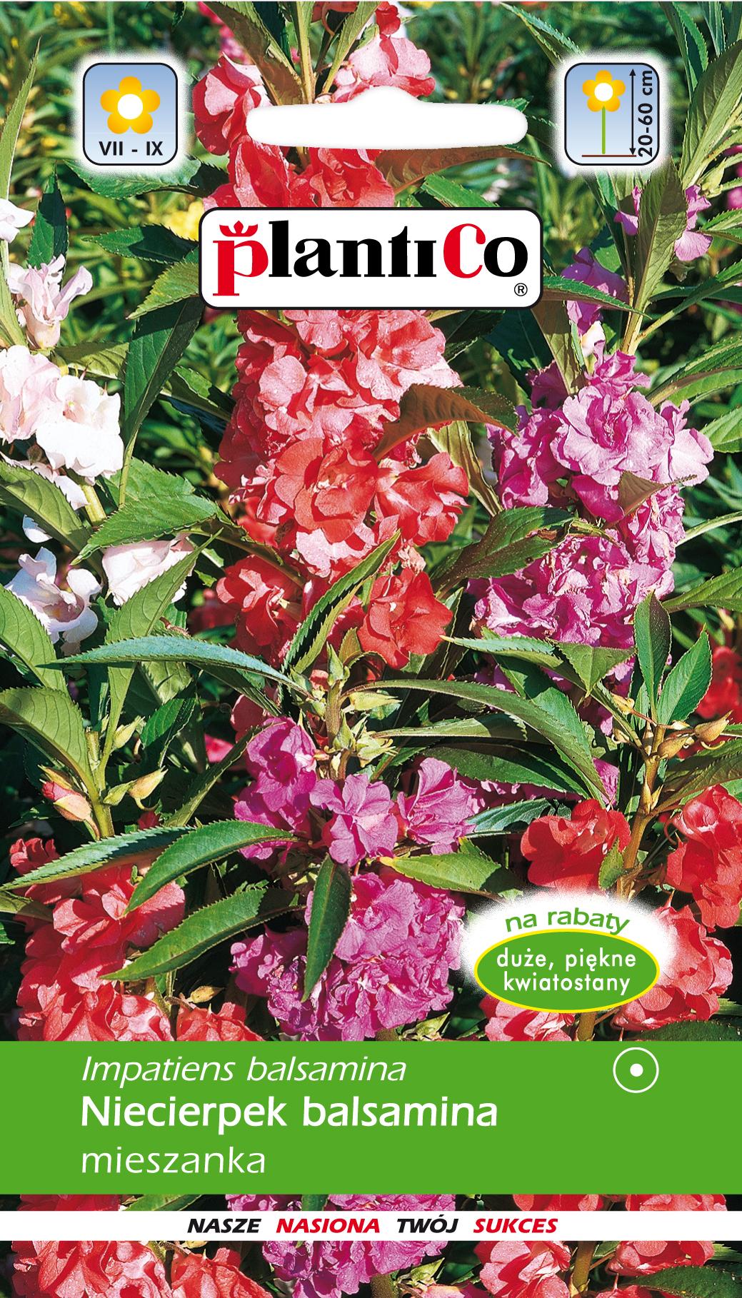 Niecierpek Balsamina Mix Plantico Sklep Firmowy Online